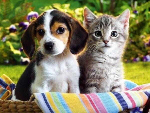 Chien et chat amies des seniors