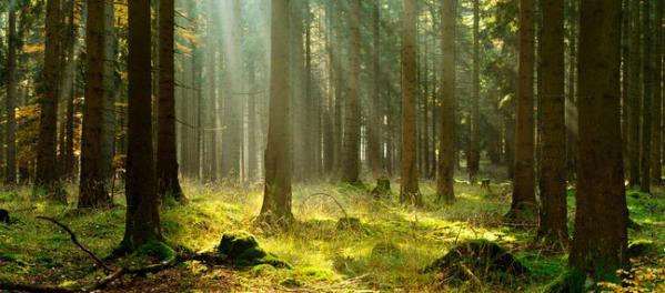 Maladies chroniques et les arbres