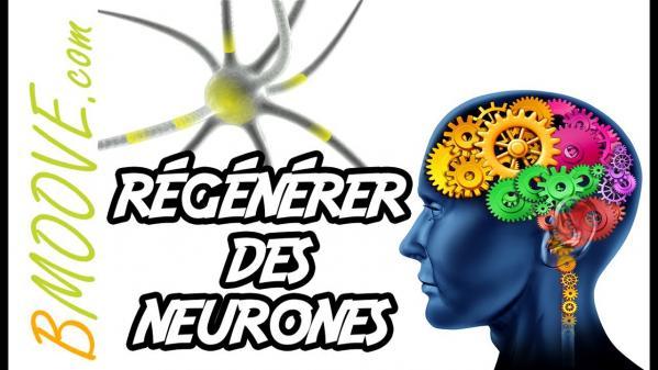Regenerer des neurones