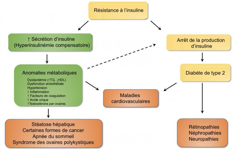 Resistance a l insuline