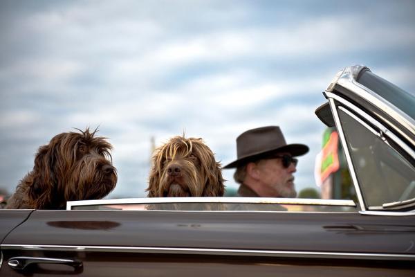 Senior chien animal domestique html